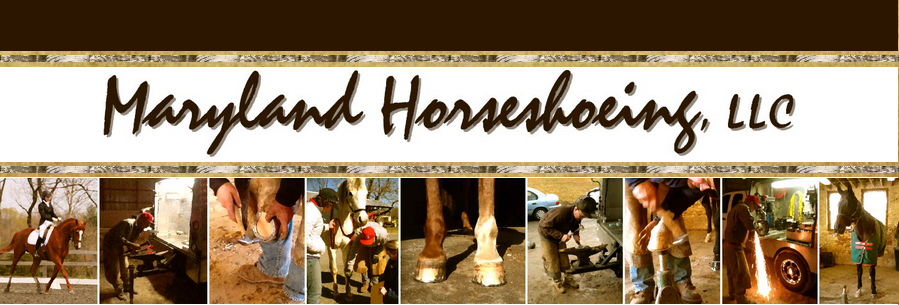 Maryland Horseshoeing LLC